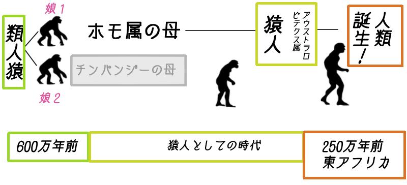 猿人 進化 類人猿 図 人類