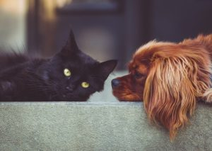 犬と猫 人類