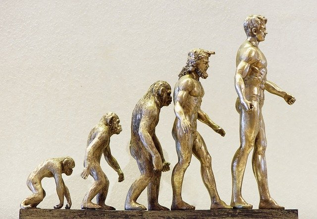 進化 ネアンデルタール 人類